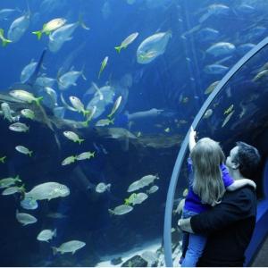 Georgia Aquarium sm