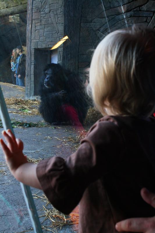 Houston Zoo sm