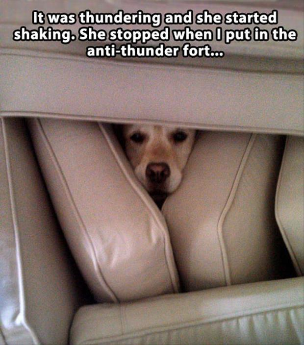 attack-of-the-funny-animals-76