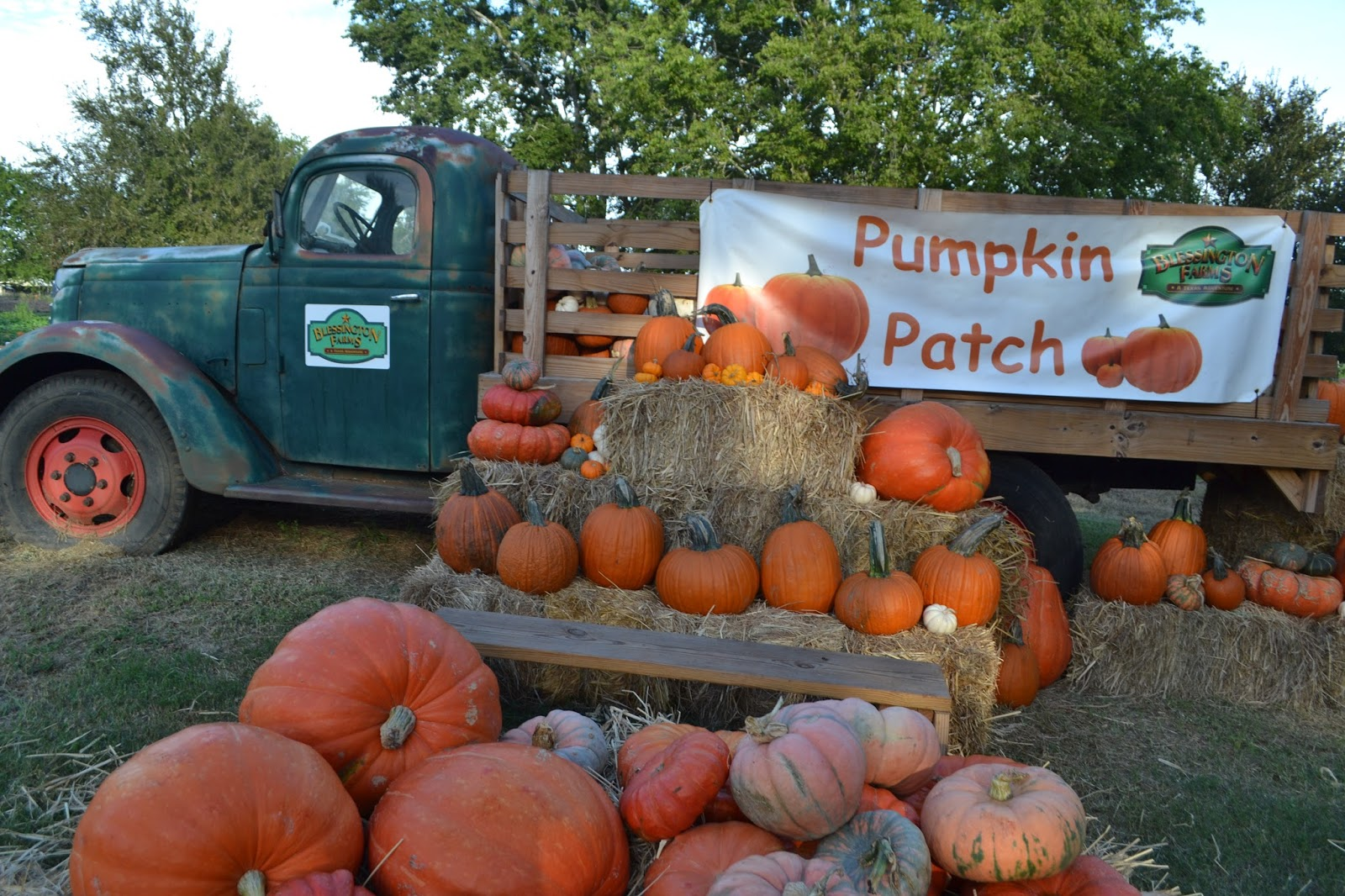 blessington-farms-pumpkin-patch-and-fall-festival